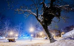 Картинка Парк, зима, снег, дерево, свет, лавочки, лавки, деревья