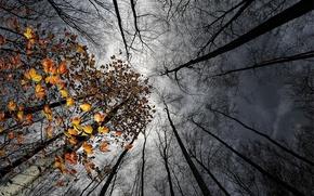 Картинка осень, небо, листья, деревья, тучи