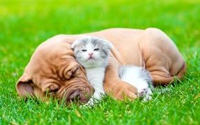 Обои сон, трава, пушистый, котёнок, друг, щенок, взгляд, собака