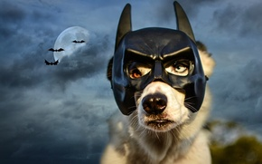 Картинка небо, ночь, тучи, луна, собака, маска, бэтмэн, летучие мыши