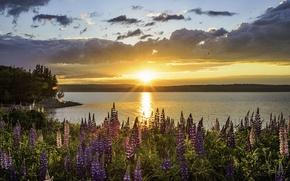 Картинка свет, цветы, утро