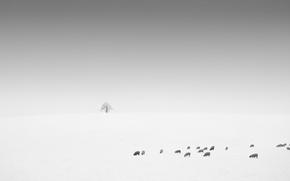 Картинка поле, овцы, минимализм