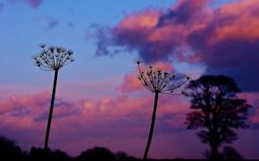 Картинка небо, облака, макро, закат, растение, вечер