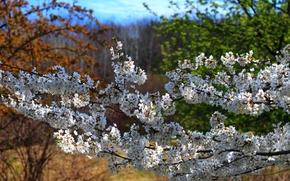 Картинка природа, Весна, цветение, nature, spring, flowering