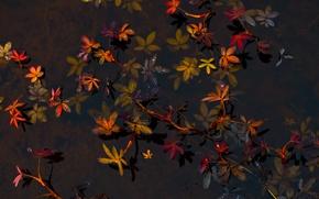 Картинка листья, вода, растения, дно, прозрачная
