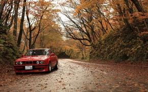 Картинка осень, листья, бмв, bmw. red