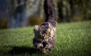 Картинка поле, кошка, фон