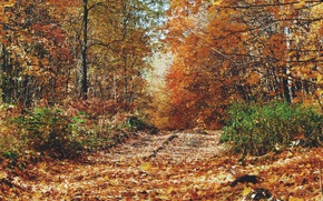 Картинка дорога, осень, листья, деревья, желтые