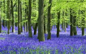 Картинка лес, лето, деревья, цветы, стволы