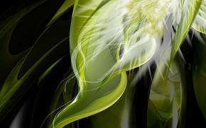 Обои зеленый, растение