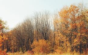 Картинка осень, листья, деревья, желтые