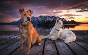 Картинка небо, облака, горы, пирс, Собаки