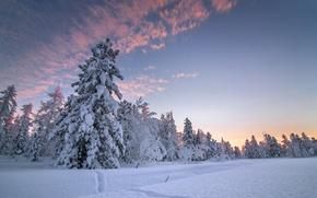 Картинка Небо, Природа, Зима, Снег, Ель
