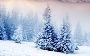 Картинка лес, снег, Зима, мороз