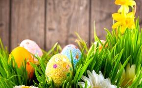 Картинка трава, цветы, стена, праздник, доски, ромашки, яйца, Пасха, нарциссы, Easter