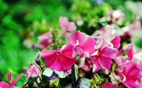 Картинка макро, цветы, ярко