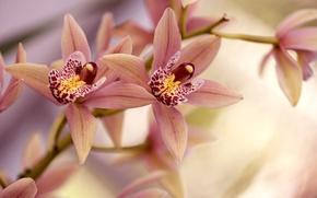 Картинка ветка, лепестки, орхидея