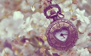 Картинка цветы, металл, часы, белые, сердечко, карманные