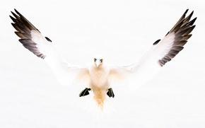 Картинка птица, крылья, клюв