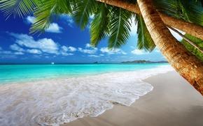 Обои пальмы, paradise, vacation, остров, coast, берег, beach, blue, песок, море, summer, tropical, океан, emerald, солнце, ...
