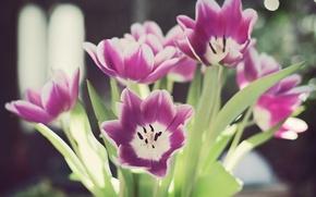 Обои листья, цветы, блики, стебли, лепестки, тюльпаны, боке