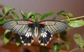 Картинка бабочки, бабочка, растение, крылья