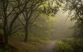 Обои лес, тропинка, туман, лето