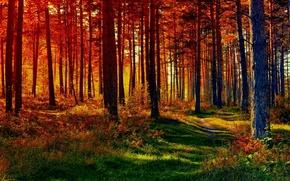 Картинка осень, лес, свет, тропинка