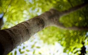 Картинка зелень, лето, свет, деревья, свежесть, ветки, тепло, фото, дерево, настроение, листва, листок, фокус, размытие, ветка, ...