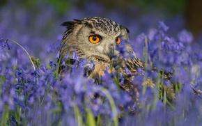 Картинка цветы, сова, птица, колокольчики, филин