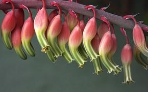 Картинка цветы, растение, кактус, цветение