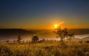 Картинка природа, туман, утро