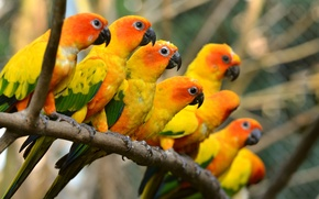 Картинка багажник, попугаи, красивая, beautiful, birds, птиц, trunk, parrots