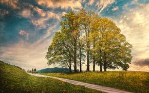 Картинка небо, облака, деревья, обработка