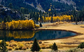 Обои осень, лес, природа, озеро