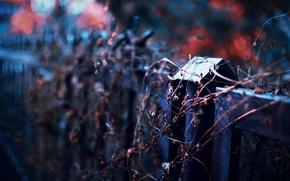 Картинка осень, забор, растение, фокус, вечер, боке, сухое