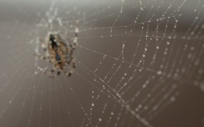 Картинка spider, nature, macro, bokeh, web, worm