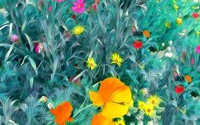 Картинка поле, трава, листья, природа, мак, лепестки, луг, космея