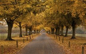 Картинка забор, здание, аллея, деревья, арка, осень