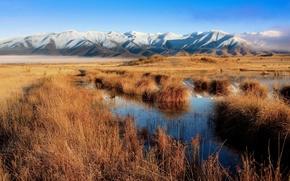 Обои Новая Зеландия, трава, горы, Болото