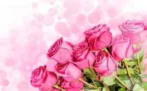 Картинка цветы, букет, розовый фон, розовые розы