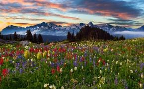 Картинка небо, облака, деревья, пейзаж, закат, цветы, горы, природа