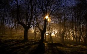 Картинка утро, свет, природа, туман, пейзаж, лес