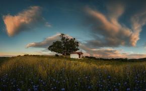 Картинка поле, цветы, утро