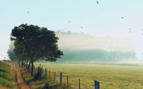 Картинка утро, обочина, туман, природа, птицы, забор, роса, небо, трава