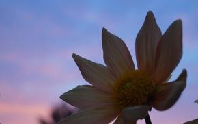 Картинка цветок, макро, закат