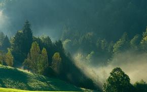 Обои лес, горы, природа, туман, утро