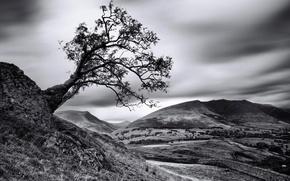 Картинка дерево, склон