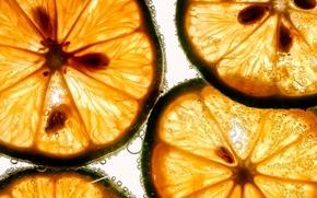 Картинка макро, фрукт, лайм, дольки