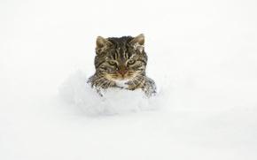 Обои сугробы, снег, кот